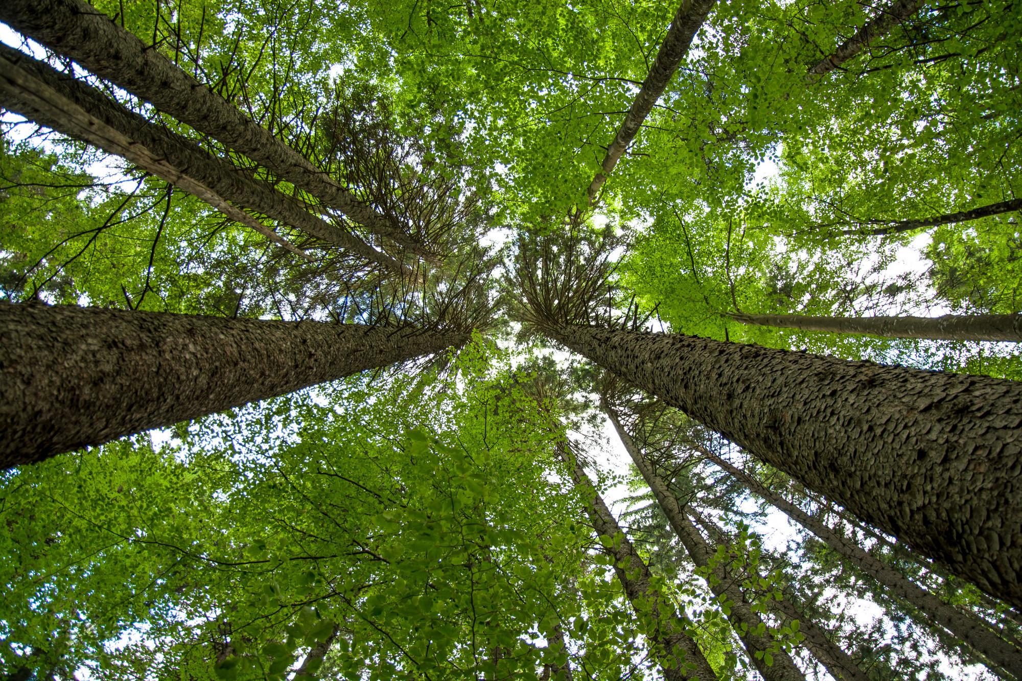 Duurzaamheid - CO2 - CLT